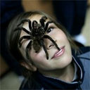 Arachnophiles: Lovers Of The Unlovable