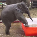 Baby Elephant Takes a Bath
