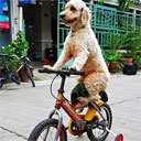 Chill Dog Riding a Bike