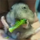 Hamster Dance Revolution: Broccoli Edition