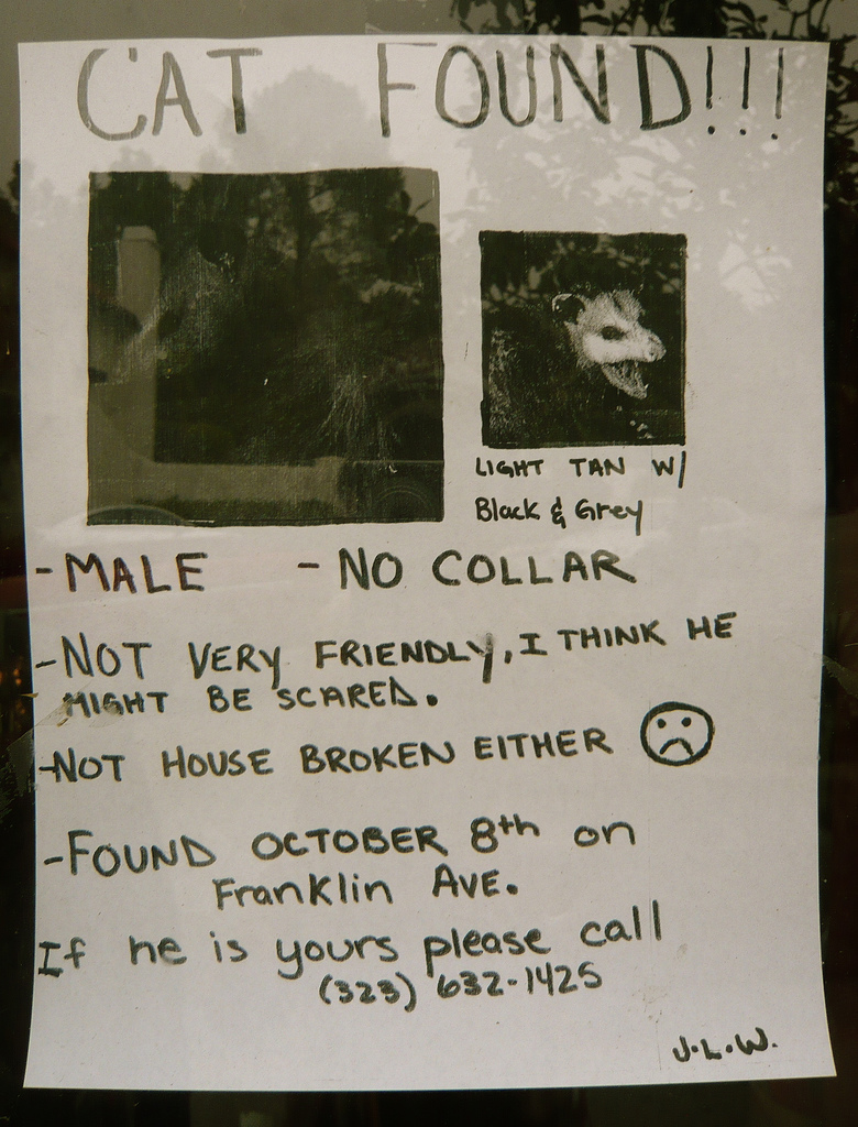 Cat Found Ferret Poster