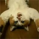 Cute Mr. Cat Lies on His Back