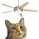 Fluffy the Ceiling Fan Cat