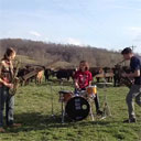 Cow Band