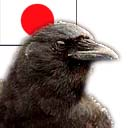 Japanese Crows are Smart