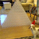 Dog Receives 210 Empty Plastic Bottles for Christmas