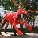 Dog Lobster