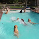 Dog Day Afternoon (at the Pool)
