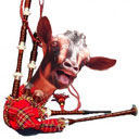Goat Bagpipes