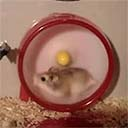 High Speed Hamster