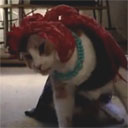 Most. Humiliated. Cat. Evar.