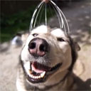 Husky Loves Scalp Massager