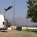 Jumpy the Stunt Dog