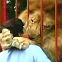 Step right up folks! See the amazing kissing lion!