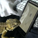 Bearded Dragon Playing a Video Game