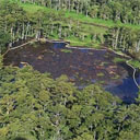 Louisiana Sinkhole Swallows Trees