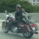 Poodle Rides a Harley