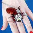 The Roach Brooch