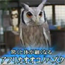 Japanese owls have no respect for being fat.