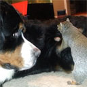 Squirrel Hides Nuts in Dog's Fur