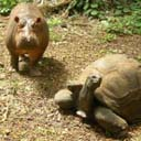 The Tortoise and the Hippo: Where Are They Now?